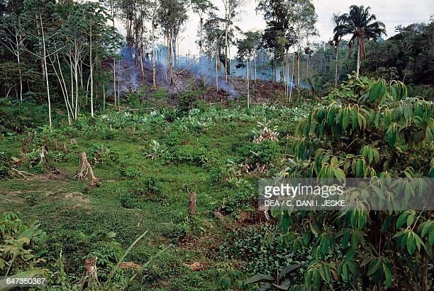 Deforestation in the Amazon rainforest Venezuela
