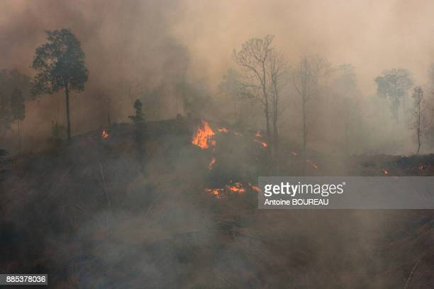 deforestation of the primary forest in the taungoo area by fire to instal teak plantations, burma - slash and burn stock pictures, royalty-free photos & images