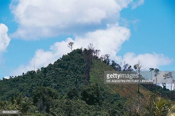 Deforestation on the banks of the Mahakam river East Kalimantan Borneo Indonesia