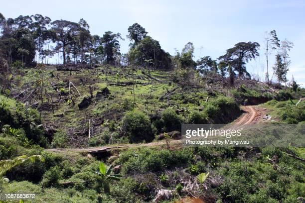 deforestation - fire ape stock-fotos und bilder