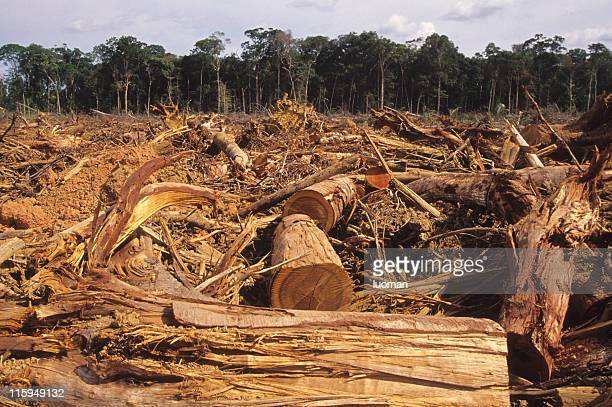 deforestation - deforestation stock pictures, royalty-free photos & images