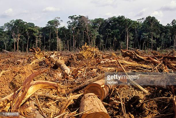 deforestation - vernieling stockfoto's en -beelden