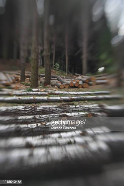 deforestation - radicella stock pictures, royalty-free photos & images