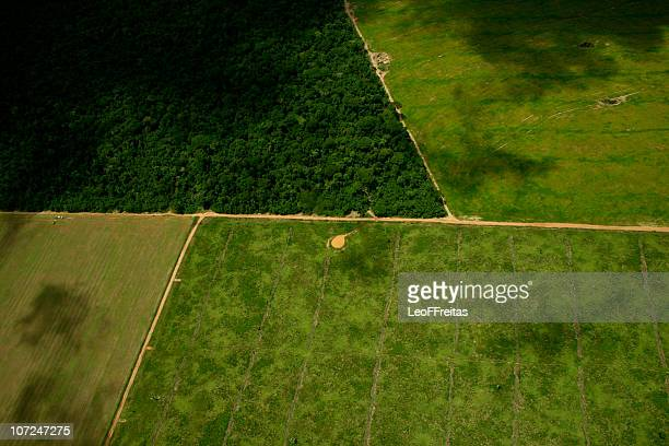 deforestation process to soy plantation - mato grosso state stock pictures, royalty-free photos & images