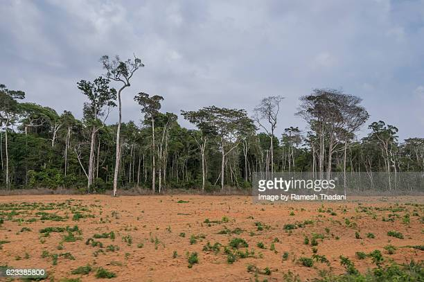 deforestation vs. agriculture - cerrado stock pictures, royalty-free photos & images