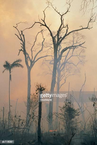 deforestation,amazon - amazon rainforest burning stock pictures, royalty-free photos & images