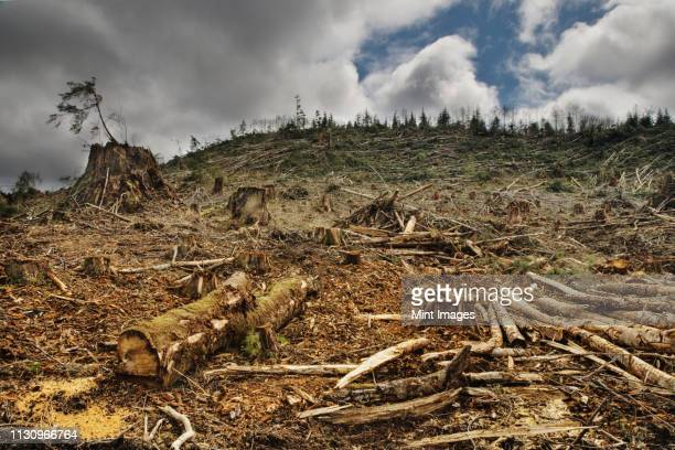 deforested area - deforestation stock pictures, royalty-free photos & images