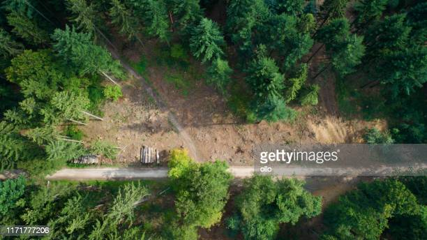 deforested area, taunus mountains, germany - environmental damage stock pictures, royalty-free photos & images