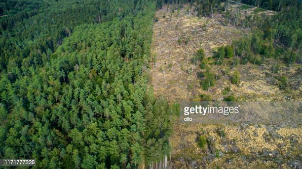deforested area, taunus mountains, germany - deforestation stock pictures, royalty-free photos & images