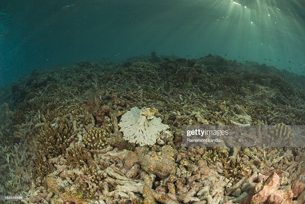 degraded coral reef : Stock Photo