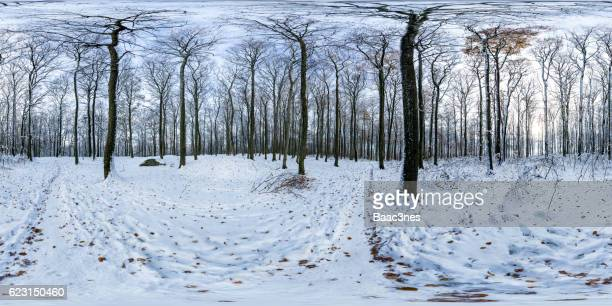 360 degree panorama shot - Beech forest covered with snow