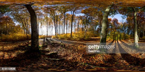 360 degree panorama shot - empty bench in the forest - 全天周パノラマ ストックフォトと画像