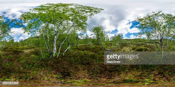 360 degree view - Mountain birch in Sirdal, Norway