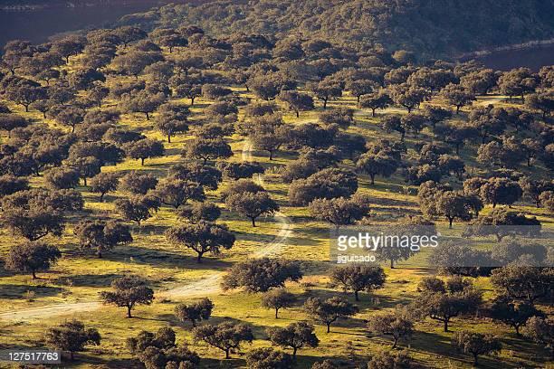 Dehesa Monfrague national park
