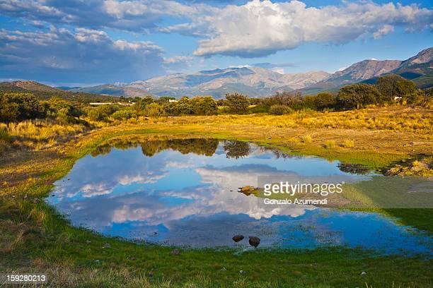 Dehesa, typical pasture of Extremadura.