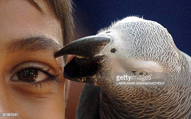 A Sri Lankan child is pecked by an African Grey Parrot at a zoo in Dehiwala near Colombo 11 March 2006 The Sri Lankan government has banned the...