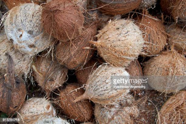 dehusked ripe tropical coconuts, neil island, south andaman islands - argenberg ストックフォトと画像