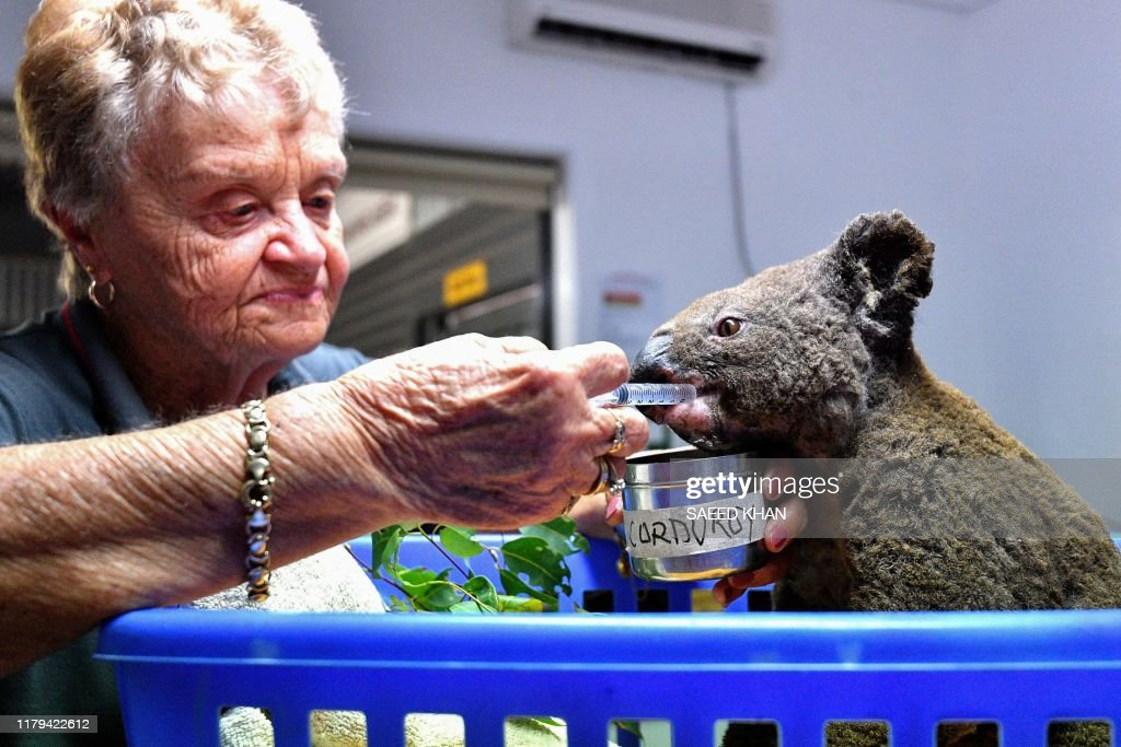 AUSTRALIA-KOALA-ANIMAL-FIRE : News Photo
