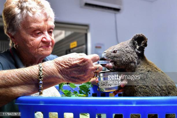 Dehydrated and injured Koala receives treatment at the Port Macquarie Koala Hospital in Port Macquarie on November 2 after its rescue from a bushfire...