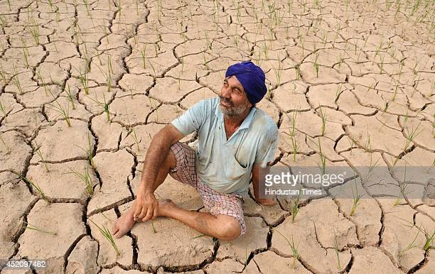 A dejected Indian farmer sits in his parched paddy field at Masingan village near Devigarg town on July 13 2014 in Patiala India Due to acute power...