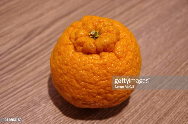 dekopon (citrus reticulata) also known as a sumo mandarin orange - celulitis fotografías e imágenes de stock
