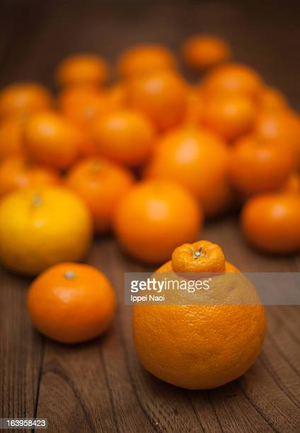 dekopon orange and various citrus fruits - ippei naoi stock photos and pictures