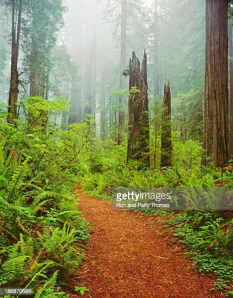 Del Norte Coast Redwoods St. Park