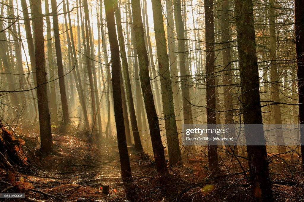 Delamere Forest : Stock Photo