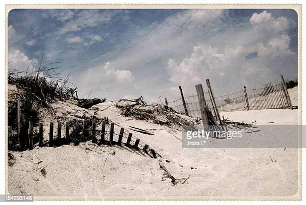 Delaware Sand Dunes - Vintage Postcard