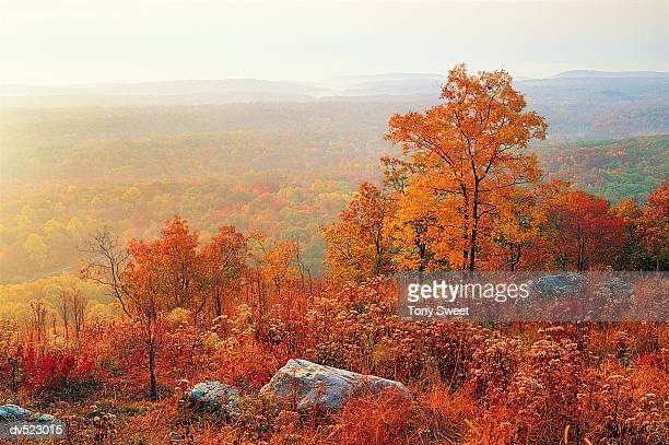 delaware water gap, national recreation area, pennsylvania, usa - pennsylvania stock-fotos und bilder