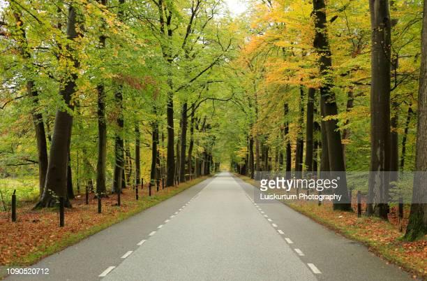 delden trees in netherlands - oost stockfoto's en -beelden