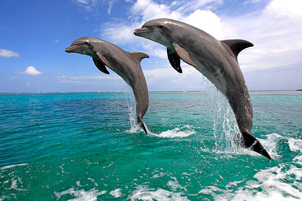 Delfin (Grosser Tuemmler) Wall Art