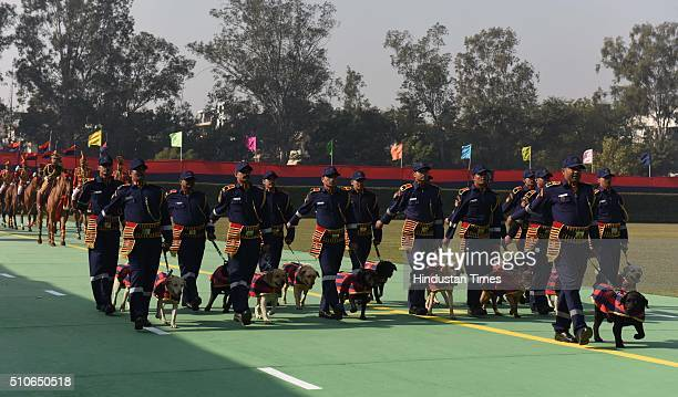 Delhi Police Dog Squad during the 69th Raising Day Parade of Delhi Police on February 16 2016 in New Delhi India Singh urged Delhi Police to adopt...