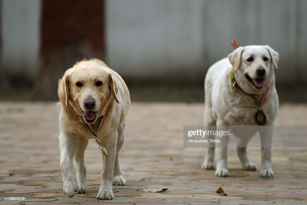 IND: All-India Gold Medalist Of Delhi Police Dog Squad