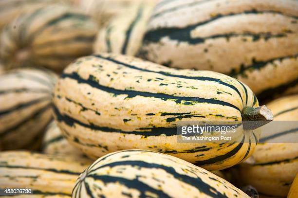Delicata is one of the squash varieties that David Heisler grows on his farm October 23 2014 in Dickerson MD