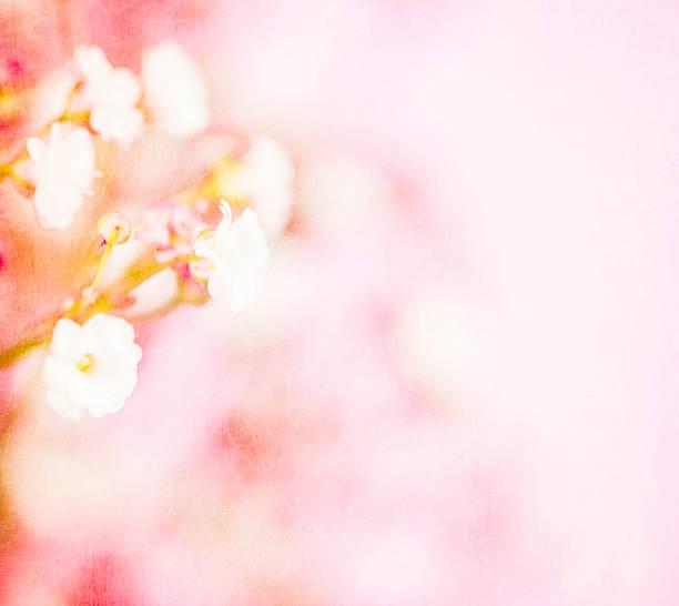 Delicate Baby's Breath Flowers
