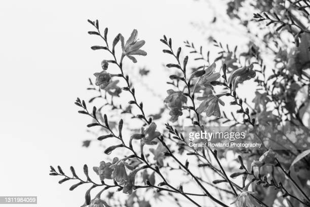 delicate bw nature image - black and white stock pictures, royalty-free photos & images