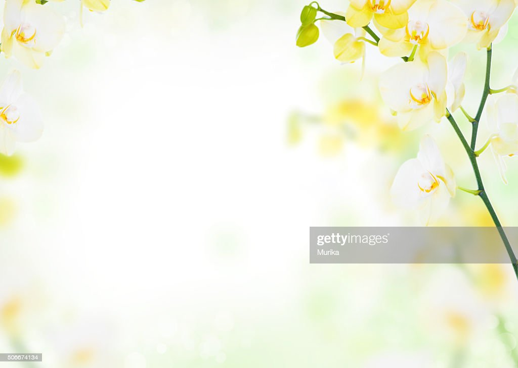 free yellow flower white background images pictures and