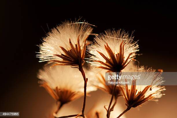 Delicate flowers in silhouette