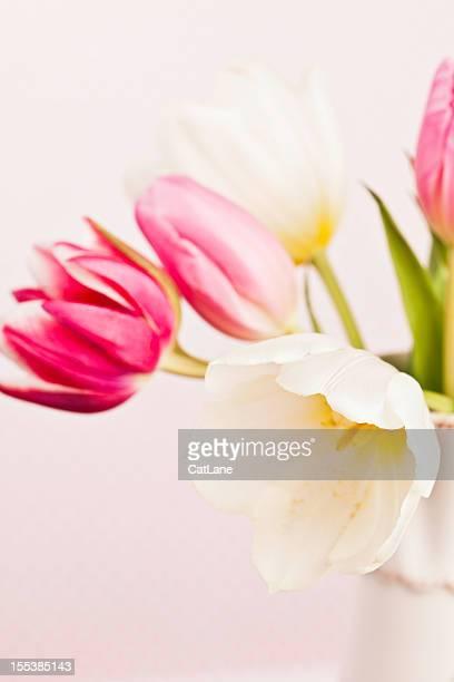 Sanfte Frühling Tulpen