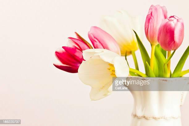 Delicate Spring Tulips