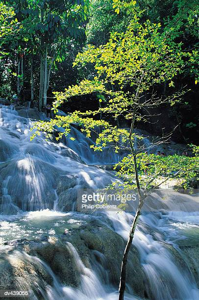 Delicate tree and tropical waterfall