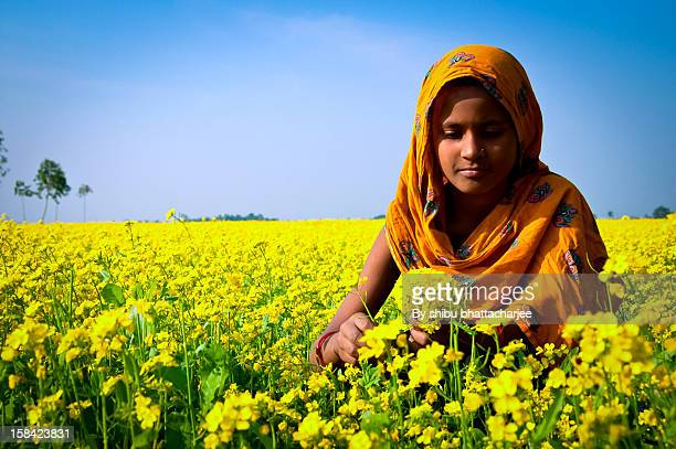delicious mustard flowers - bangladeshi beautiful girl stock photos and pictures