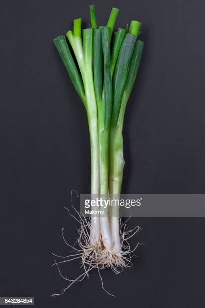 Delicious spring onions on black background. Greenery