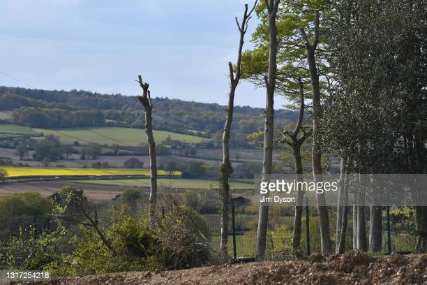 De-limbed trees await felling at Jones Hill Wood on May 07, 2021 in Great Missenden, England. After a prolonged legal battle 'Natural England' issued...