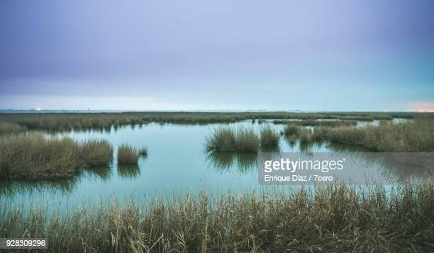delta del ebro at dusk - salt_marsh stock pictures, royalty-free photos & images