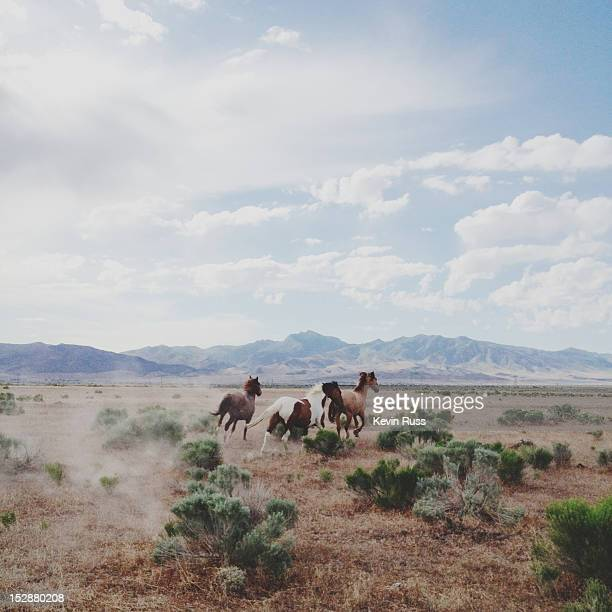delta horses - animals in the wild stock pictures, royalty-free photos & images