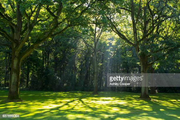 delville wood, scene of intense fighting during the battle of the somme, longueval, france. - hauts de france stock photos and pictures