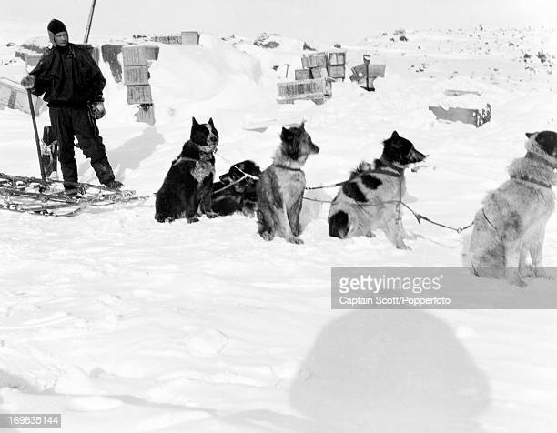 Demetri Gerof with a dog team at Cape Evans photographed during the last tragic voyage to Antarctica by Captain Robert Falcon Scott circa October...