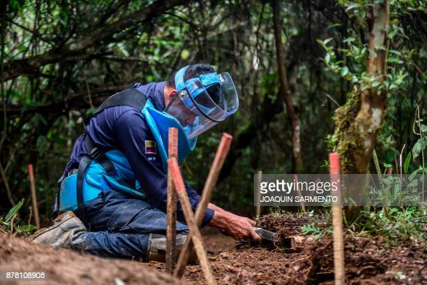 A deminer digs lookings for mines at a mine field at the Orejon sector in the municipality of Briceno Antioquia Department Colombia on November 22...